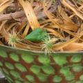 Gefäß grün gehämmert